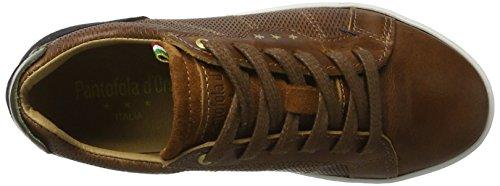 Shell Pantofola D'oro Jungen Sneaker Canaverse tortoise Low Ragazzi Braun qU8UZwx6