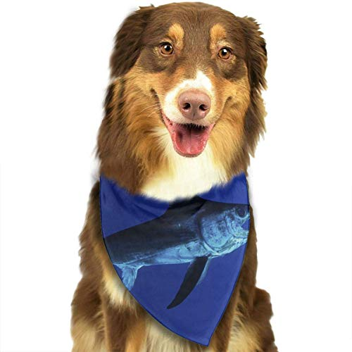 Sdltkhy Fastest Fish in Ocean Pet Dog Cat Bandanas Triangle Bibs Pet Scarf Dog Neckerchief Headkerchief Pet Accessories (Furry Kostüme Uk)