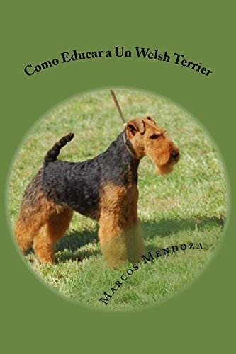 Como Educar a Un Welsh Terrier