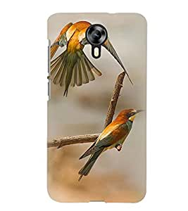 Printvisa Pair Of Love Birds Back Case Cover for Micromax Canvas Xpress 2 E313::Micromax Canvas Xpress 2 (2nd Gen)
