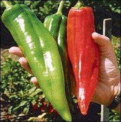 Shoppy Star Shoppy étoiles: Numex Big Jim Chili Pepper 10 + graines - 12 pouces de long!