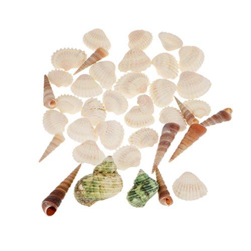 Magideal Natürliche Muscheln Gemischt Strand Muscheln Verschiedenen Größen In Einer Netztasche