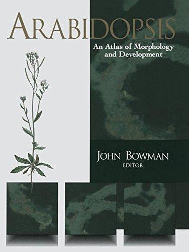Arabidopsis. : An Atlas of Morphology and Development