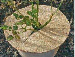 STAR Kokos-Mulchscheibe natur von STAR bei Du und dein Garten