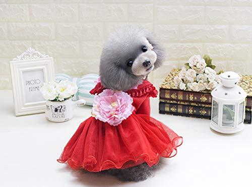 PZSSXDZW Pet Kleidung Herbst und Winter Neue Pfingstrose Rock Hund Kleidung Teddy kleine ()