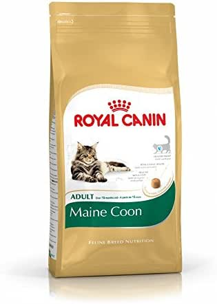 Royal Canin : Croquettes Feline Nutri Maine Coon 31: 2kg