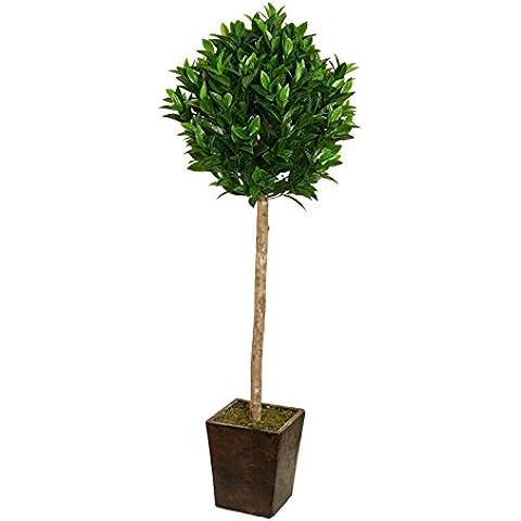 Mejor ukgd 150 cm 152,4 cm Laurel al invernadero jardín interior árbol oficina planta