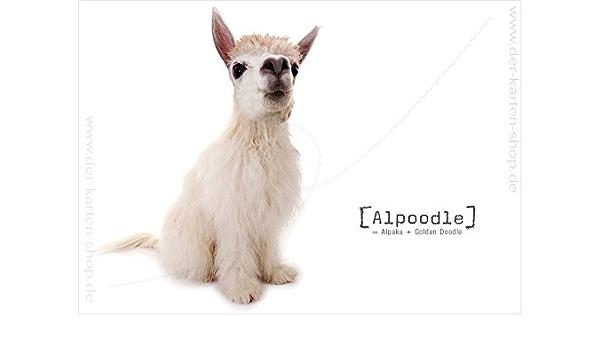3 Stück Ungewöhnliche Tierpostkarten Postkarten Karte Tierische Mutanten Mutant Kreuzung Alpaka Und Golden Doodle Hund Alpoodle Bürobedarf Schreibwaren