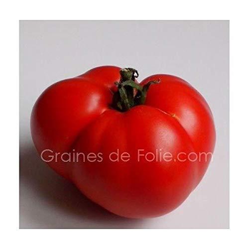 Portal Cool Marmande Tomate Samen Tomatensamen