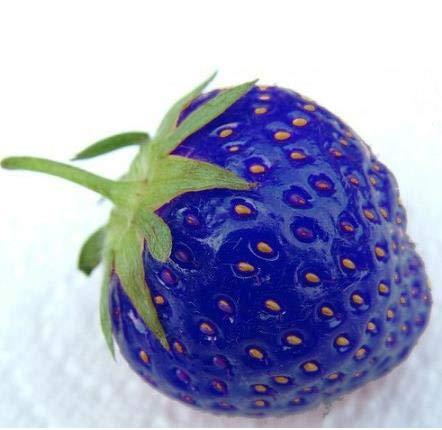 Pinkdose 100pcs parfum plantes Lily Flower Germination 95% Creepers Bonsai Bricolage Fournitures Jardin Pots Planters: Jaune