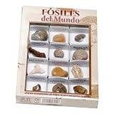 FOSILES DEL MUNDO Nº2