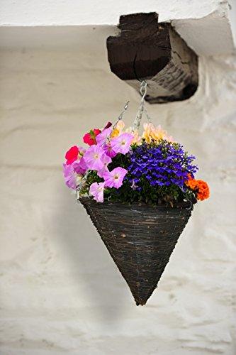 Apollo appeso piante cesto per il pascolo scuro, di forma conica, 35,5 cm