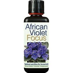 Afrikanisches Veilchen, Focus, 300 ml