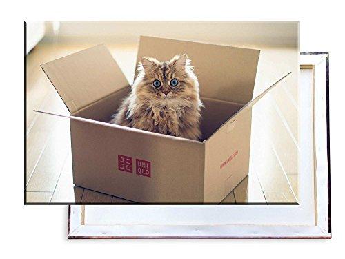 Katzenfalle - 60x40 cm - Bilder & Kunstdrucke fertig auf Leinwand aufgespannt und in erstklassiger Druckqualität