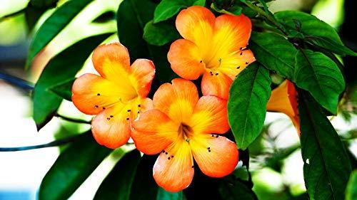 YKCKSD Klassisches Puzzle Puzzle Holzspielzeug, Puzzle 1000 Teile,Home Decor Geschenk,Natur, Pflanzen, Farben orange Blume -
