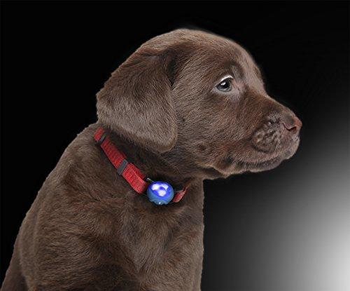 LED Silikon Leuchtanhänger inkl. Batterie Leuchthalsband für Hund Haustier Katze uvm. Led Hundehalsband in blau von der Marke PRECORN