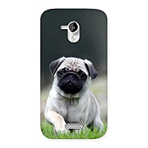 NEO WORLD Remarkable Pug Back Case Cover for Micromax Canvas HD A116