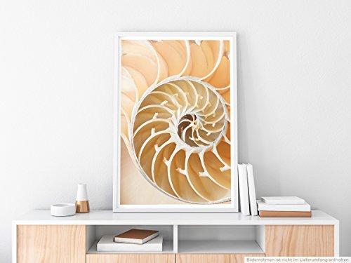 EAU ZONE Home Bild - Naturbilder – Perlboot Muschel- Poster Fotodruck in höchster Qualität (Muscheln Malerei)