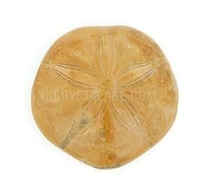 Sea Urchin Fossil - Polished
