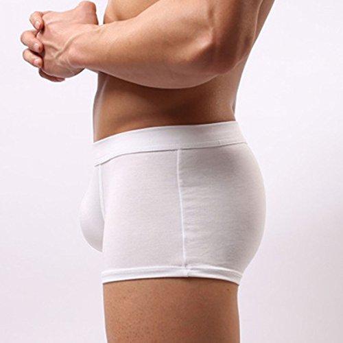 Panegy Herren Boxershorts einfarbig Unterwäsche Unterhosen atmungsaktiv Retroshorts Briefs Trunks Boxer Shorts underwear Größe Farbe Wählbar Weiß