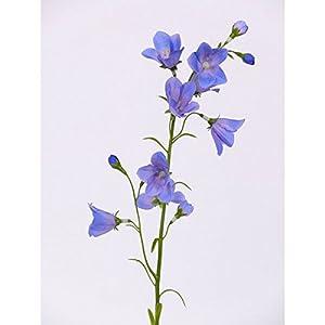 artplants.de Set de 3 x Campanula Artificial con 8 Flores, Azul, 65cm, Ø 5cm – Flor Decorativa – Planta sintética