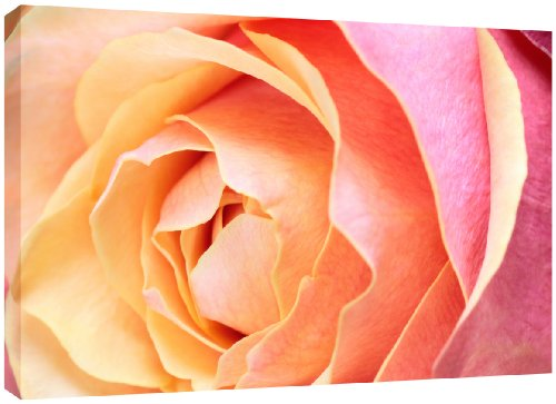 MOOL Hundebett, groß, 32 x 22, Rose Leinwandbild von Hand gespannt auf Holzrahmen mit Giclée-Druck wasserdicht, lackiert, fertig zum Aufhängen, Orange, Pink (Holzrahmen Hundebett)