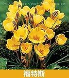 VISTARIC 100 pcs/sac, graines Spathiphyllum, balcon en pot, la plantation est simple, le taux de bourgeonnement de 95%, l'absorption de rayonnement, couleurs mÃlangÃes