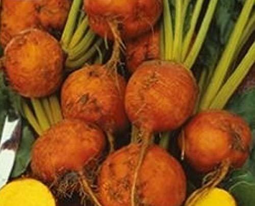 180x Rüben Gelb Burpee's Galten – Rübensamen Gemüse K518