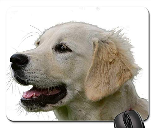 Gaming-Mauspads, Mauspad, Golden Retriever isoliert Hund Tier Haustier -