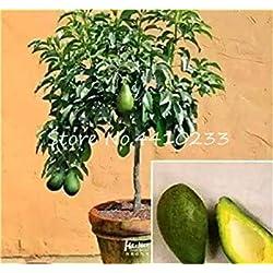 Vente ! 5 pièces Bonsai d'avocat délicieux Arbre Doux Fruit Facile à cultiver pour Jardin Potager Biologique Plante en Pot Cadeau pour Les Enfants: f