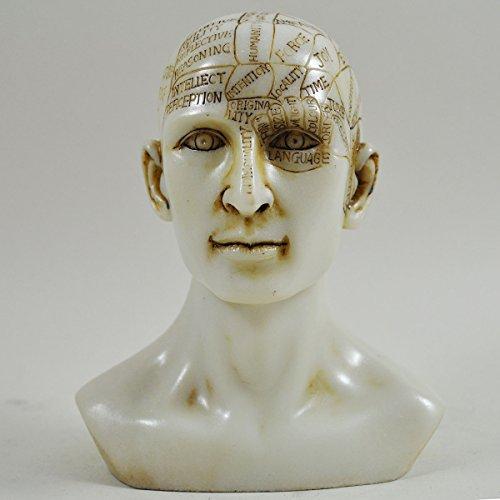 Phrenologie-Kopf, weißer Marmor-Harz, einzigartige Heimdekoration, traditionelles, medizinisches Zubehör, 15 cm hoch (Hexe Büste)
