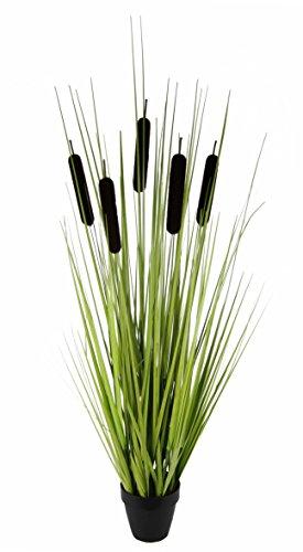 flair-flower-rohrkolben-x-5-im-topf-plastik-braun-90-x-25-x-25-cm