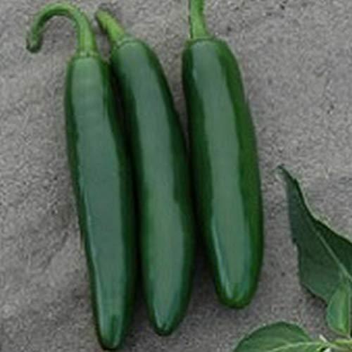 Astonish Samen-Paket: 10 - Seeds: Cocula F1 Hybrid-Peperoni-Samen - Diese sind von hoher Qualität Serrano Peppers !!!
