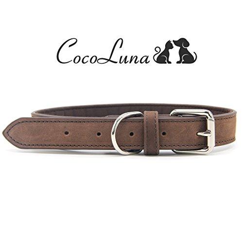 Cocoluna Luxus Hundehalsband aus echtem Leder mit Polsterung und Edelstahl Schnalle für mittlere bis große Hunde, Wasserfest (Luxus-leder-hundehalsbänder)