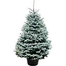 suchergebnis auf f r weihnachtsbaum im topf. Black Bedroom Furniture Sets. Home Design Ideas