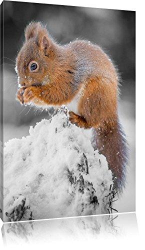 piccolo-scoiattolo-in-inverno-nero-bianco-dimensioni-120x80-su-tela-xxl-enormi-immagini-completament