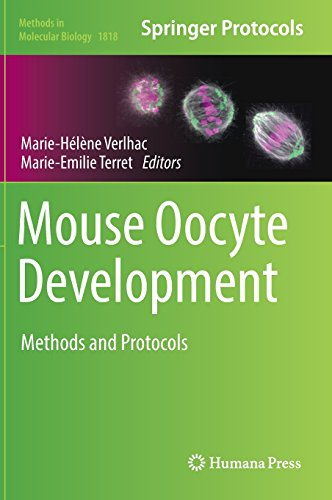 Mouse Oocyte Development: Methods and Protocols (Methods in Molecular Biology, Band 1818)