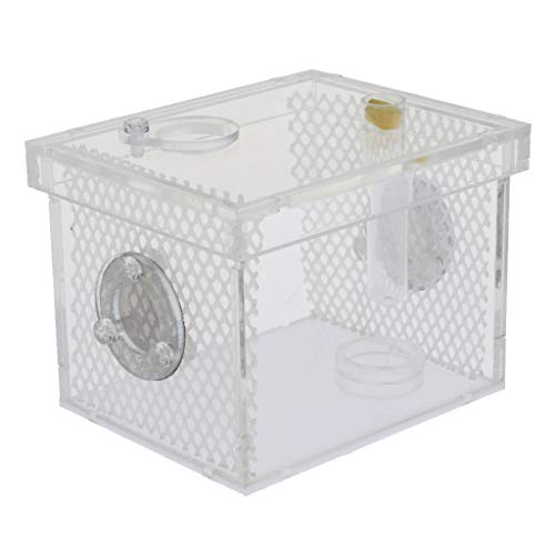B Blesiya Acryl Terrarium Futterbox Zuchtbox für Reptilien und Insekten - S