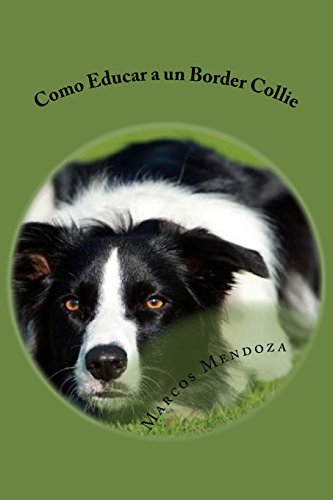 Como Educar a un Border Collie