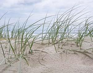Toile 'Seaside' par Mark Goodall - Taille de l'image L 50 cm x H 39.5 cm