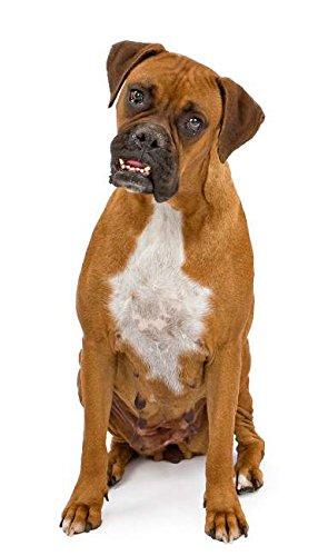 Hunde Aufkleber Sticker Boxer (Fun-auto-zubehör)