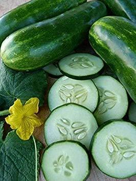Homely 100 Marketmore 76 graines de concombre à pollinisation libre biologique non OGM