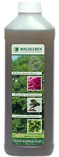 Waldleben Stärkt und fördert den Wachstum von Pflanzen