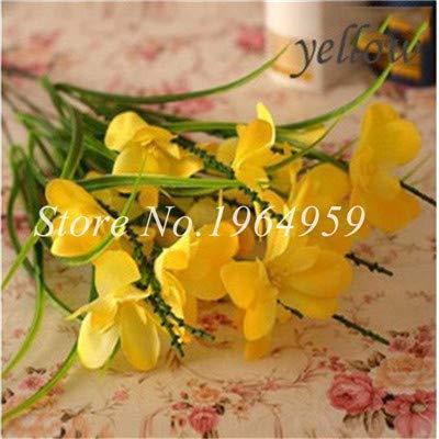 Shopmeeko Graines: Vase spécial coloré Bonsai Fleur Freesia Bonsai Décor rare orchidée Illuminez votre jardin personnel Bonsai 100 Pcs/Sac: 13