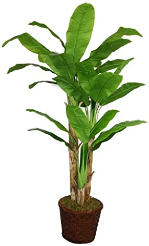 Laura Ashley 77 Inch Tall Banana Tree with Real Touch Leaves in 17 Inch Fiberstone Planter