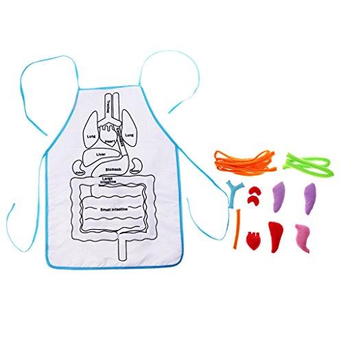 Homyl DIY 3D Plüsch gefüllt Viscera innere Organe Modell Kindergarten Kinder physiologischen Bildung Spielzeug