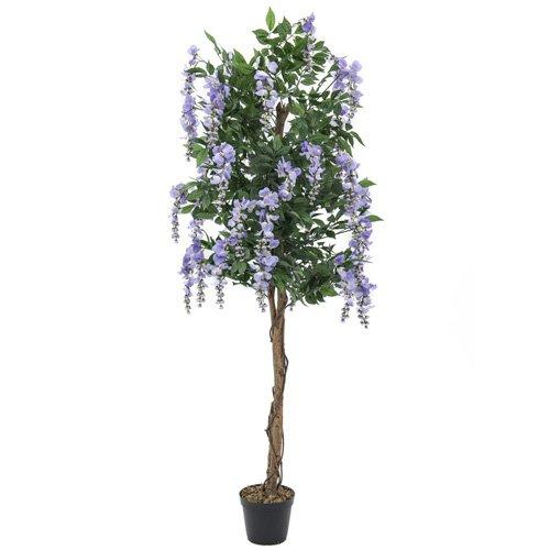 Euro Palms 82507136 Goldregenbaum 180 cm, violett