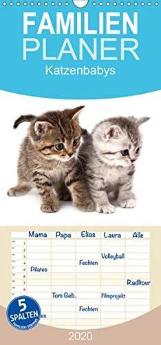 Katzenbabys - Familienplaner hoch (Wandkalender 2020 , 21 cm x 45 cm, hoch): Wandkalender - Samtpfötchen auf Entdeckungstour (Monatskalender, 14 Seiten ) (CALVENDO Tiere) (Kater Kalender)
