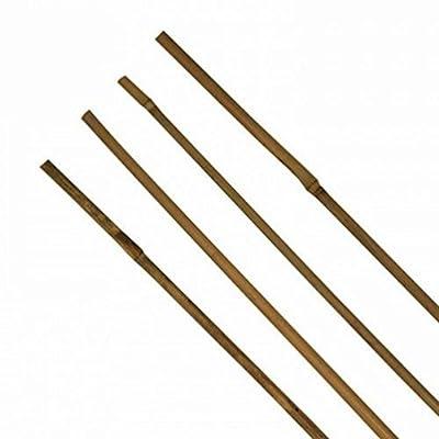 1 Stück Tonkinstab Bambusstab Pflanzstab Ø 10-12 mm x 120 cm von AnyTools bei Du und dein Garten