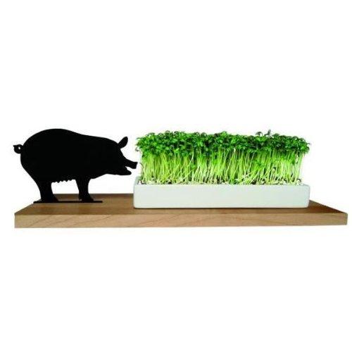 Side by Side - Kresseschale Motiv Schwein